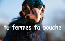 Angry French Peacock : le Tumblr du moment