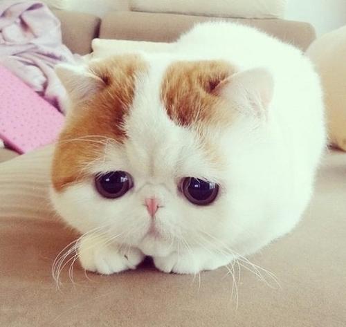 chat triste