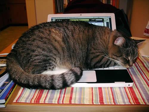 2153722710 f5483de675 6 raisons de détester les chats