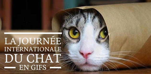 La Journée Internationale du Chat… en gifs !