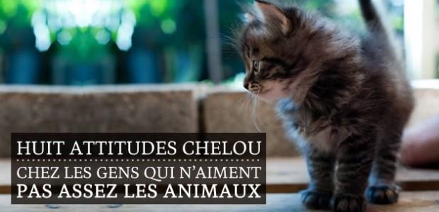 Huit attitudes chelou chez les gens qui n'aiment pas assez les animaux