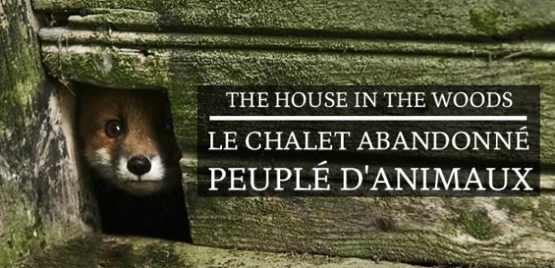 « The House in the Woods », le chalet abandonné peuplé d'animaux
