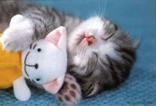 6 raisons de détester les chats cute cat sleeping