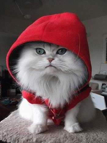 6 raisons de détester les chats hoodie red cat