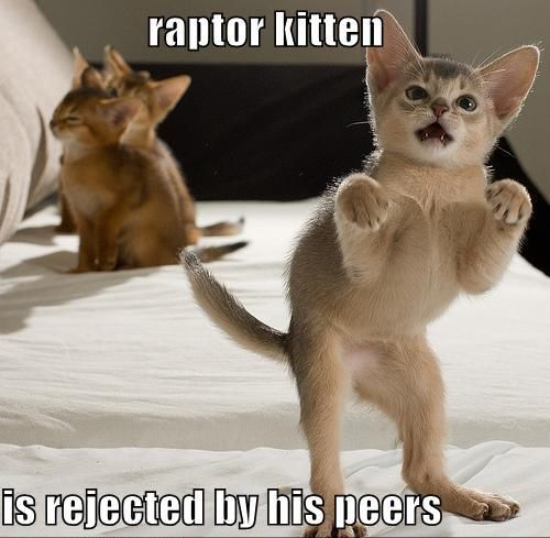 6 raisons de détester les chats raptor kitten