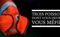 Trois poissons dont vous devriez vous méfier