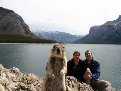 photobomb Frog rocket et les photobombs improbables — Mèmologie