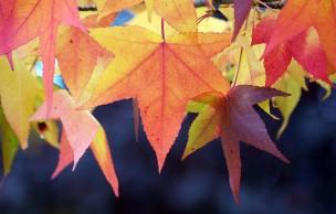 Lien permanent vers 10 raisons de se réjouir du retour de l'automne