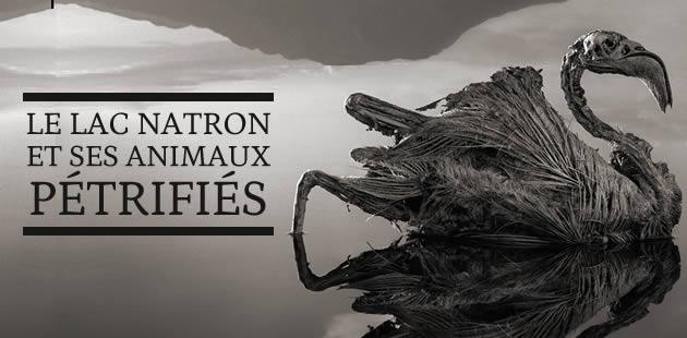 Le lac Natron et ses animaux pétrifiés