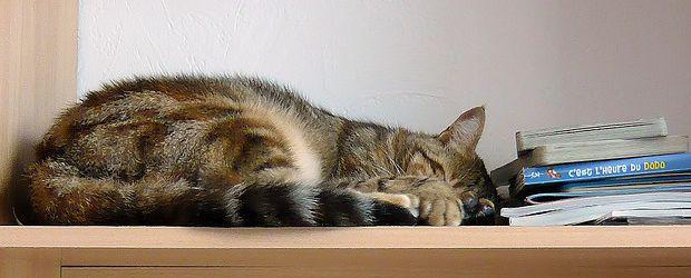 journ e du sommeil typologie de la sieste madmoizelle. Black Bedroom Furniture Sets. Home Design Ideas