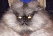Lien permanent vers Comment les chats voient-ils le monde ?
