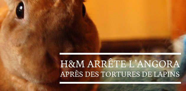 H&M arrête l'angora après des tortures de lapins