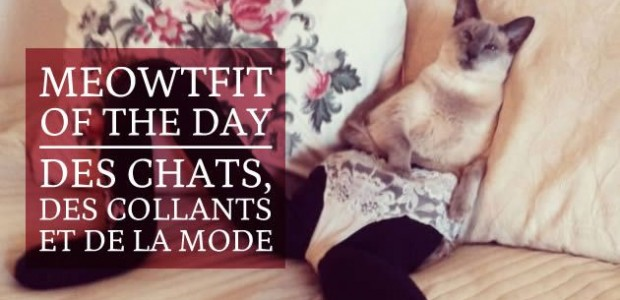 Meowtfit of the Day : des chats, des collants et de la mode