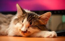 Typologie de la sieste