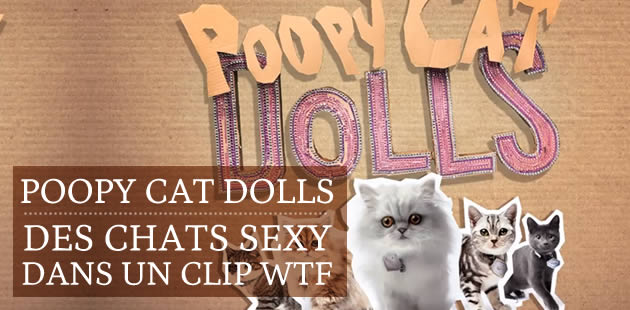 Poopy Cat Dolls : des chats sexy dans un clip WTF