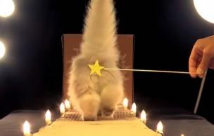 Lien permanent vers Poopy Cat Dolls : des chats sexy dans un clip WTF