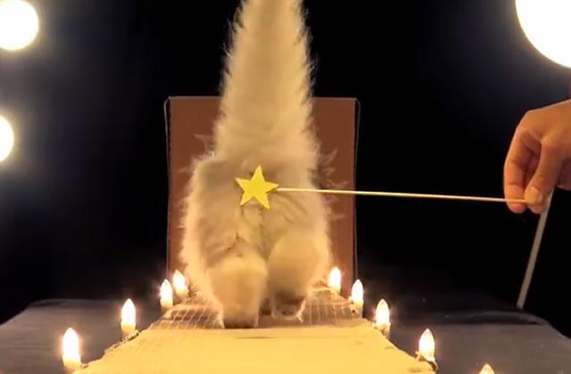 Les «Poopy Cat Dolls » et leur litière biodégradable sont de retour