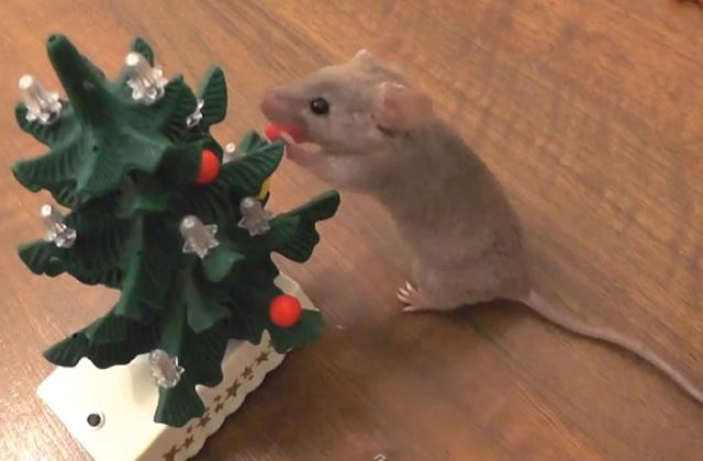 Une souris prépare son sapin de Noël, et c'est beaucoup trop mignon