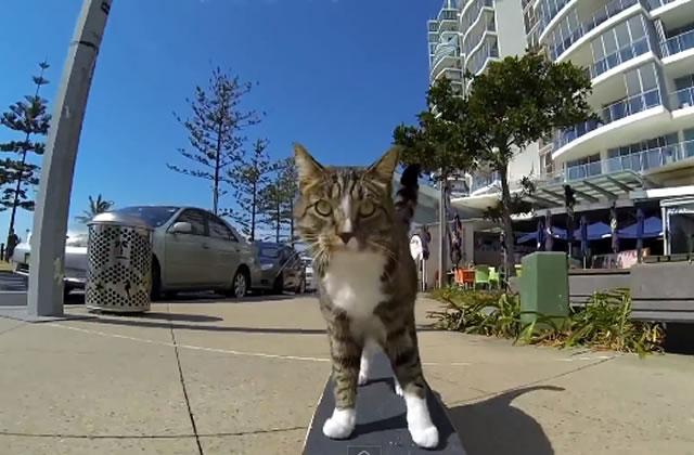 Didga, le chat skateur