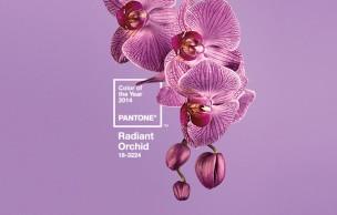 Lien permanent vers Comment porter Radiant Orchid sans faire mamie