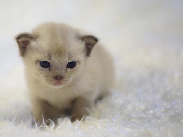 Furry manga kittens - 3 3