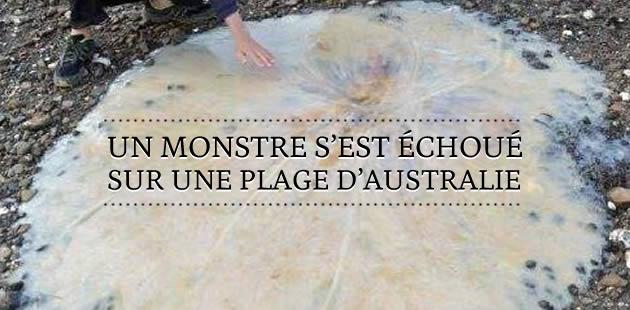 Un monstre s'est échoué sur une plage d'Australie
