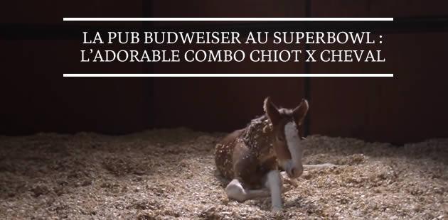 La pub Budweiser au Superbowl : l'adorable combo chiot x cheval