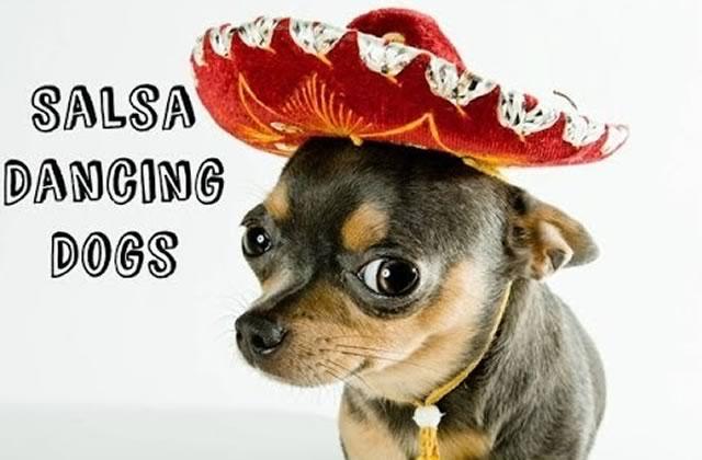 Les chiens qui dansent la salsa : la compilation