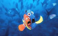L'aquarium à roulettes pour poissons pilotes