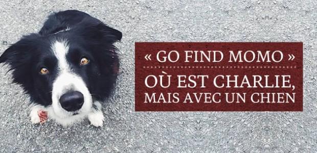 « Go Find Momo » : Où est Charlie, mais avec un chien