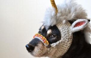Lien permanent vers Un bonnet licorne en tricot… pour chien ! — WTF Mode