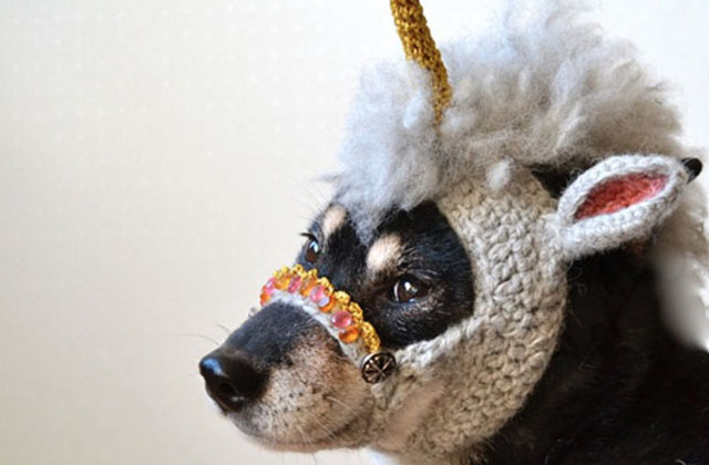 patron tricot tuque pour chien