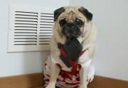 Lien permanent vers Die Hard joué par un chien (Carlin)