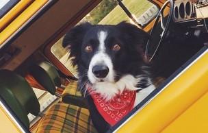 Lien permanent vers « Go Find Momo » : Où est Charlie, mais avec un chien