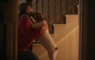 Lien permanent vers Unloved, la pub qui te fera adopter un chien