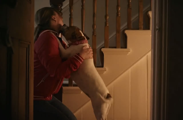 Unloved, la pub qui te fera adopter un chien