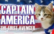 Captain America rejoué par des chatons !
