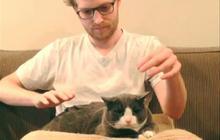#CatBand : transforme ton chat en instrument de musique