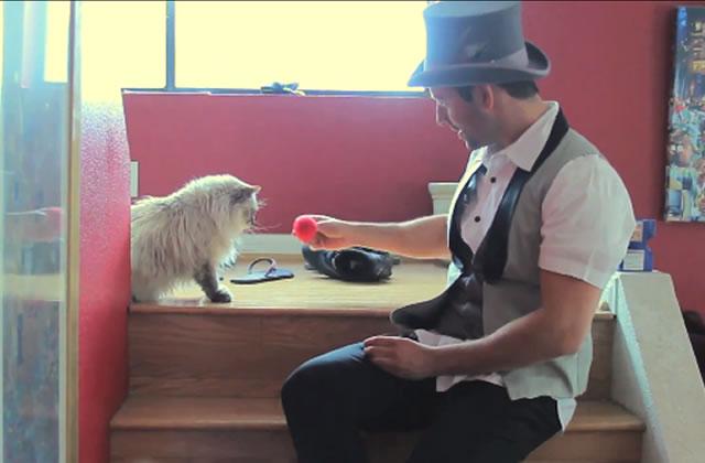 Les chats n'aiment pas plus la magie que les chiens