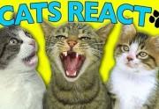 Lien permanent vers Des chats réagissent à des vidéos de chats