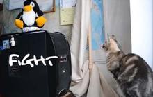 Les chats n'aiment pas les machines
