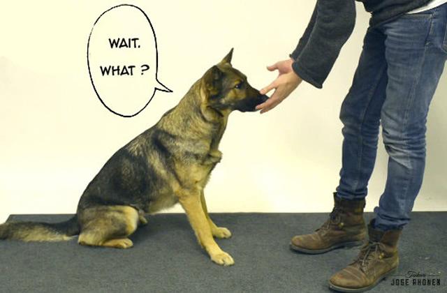 Les chiens n'aiment (toujours) pas la magie : la seconde vidéo