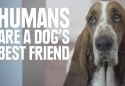 Lien permanent vers Ce que les chiens pensent des humains résumé en vidéo
