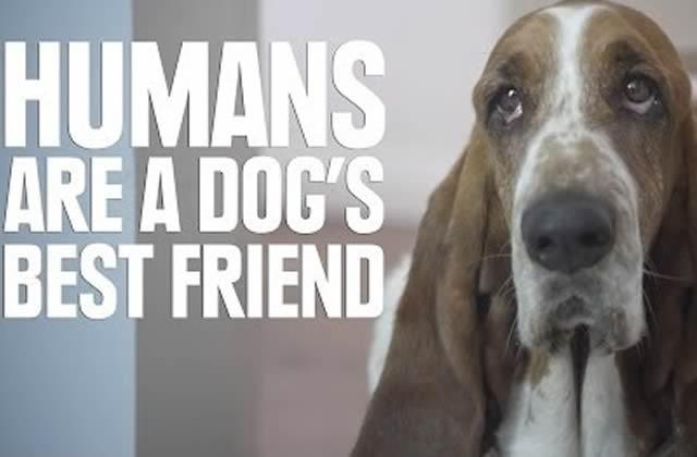 Ce que les chiens pensent des humains résumé en vidéo
