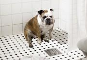 Lien permanent vers La vie secrète des chiens seuls à la maison