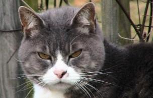 Lien permanent vers Test — Quel chat troll es-tu ?