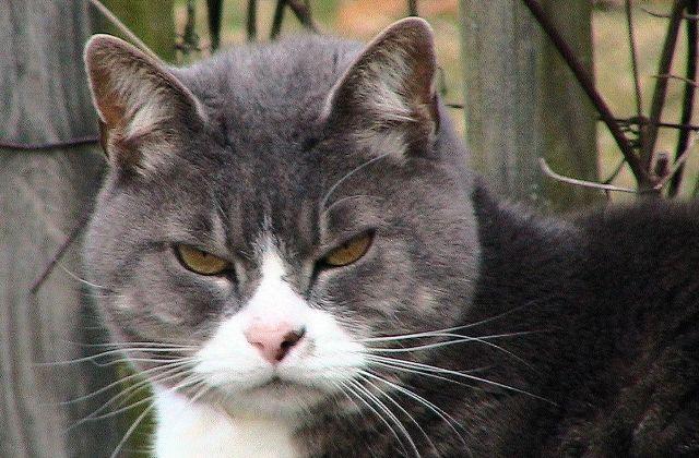 Test — Quel chat troll es-tu ?