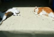 Lien permanent vers Des chats défoncés à l'herbe à chat : la compilation