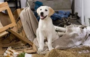 Lien permanent vers Adopter un chien, l'élever correctement et en prendre soin : conseils