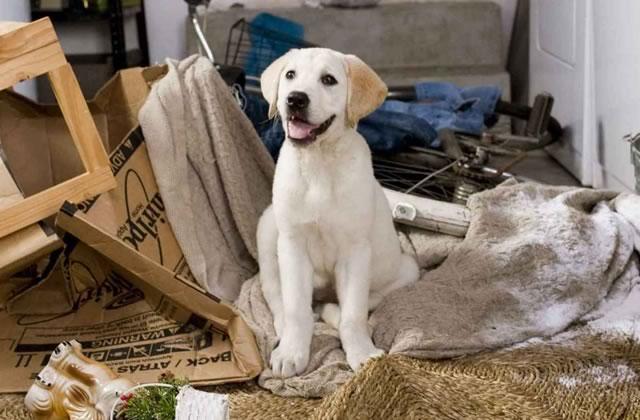 Adopter un chien, l'élever correctement et en prendre soin : conseils